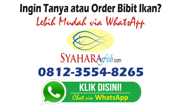 order benih ikan syahara fish