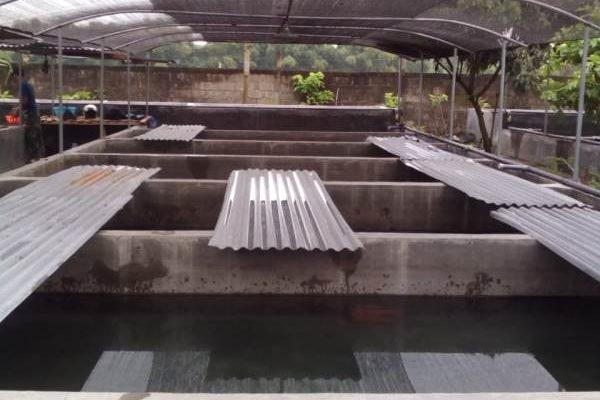 kolam pembibitan lele